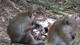 Let's Me Go Baby Monkey Miss Mum So Much ST758 Mono Monkey