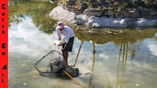Saving Koi Fish from DRYING POND!