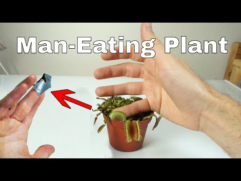 I Let a Venus Flytrap Digest My Finger For a Day–Little Shop of Horrors Challenge! thumbnail