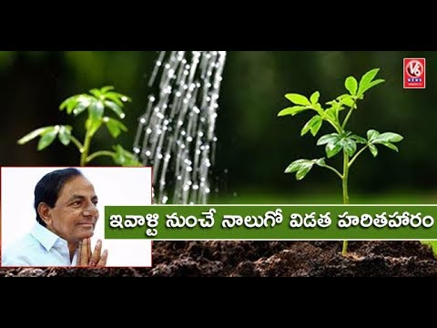 CM KCR To Launch 4th Phase Haritha Haram Today In Gajwel | V6 News