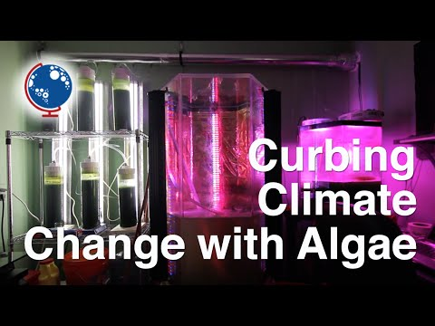 Curbing Climate Change with Algae - Cultures Digital Feature