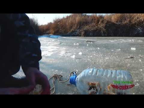 ловля змееголова видео на сырдарье