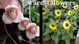 Rarest flowers in the world latest,