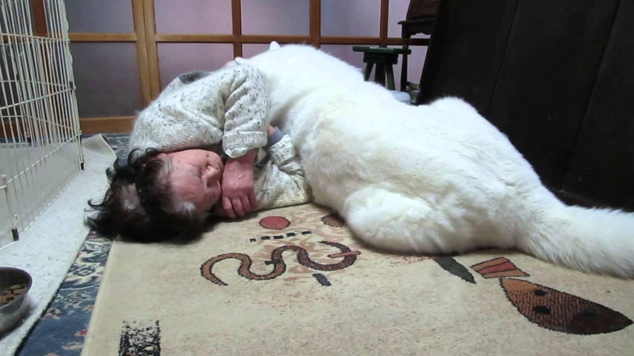 秋田犬の画像 p1_21