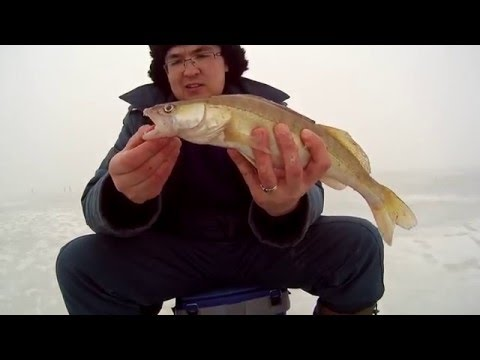 рыбалка на свияге 2016 видео