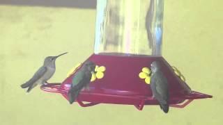 Omming birds at the Bodhi Mandala Center in Jemez Springs, N.M. during a Sai Baba Retreat.