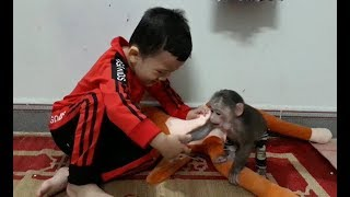 Baby Monkey | Happy Time With Kids - Funny Animals