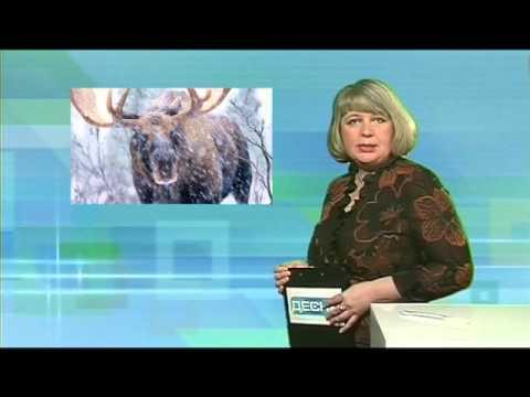 Десна-ТВ: День за днем от 19.02.2016 г.