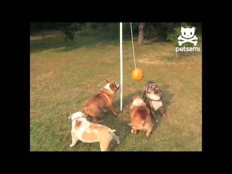 Big bulldogs play tether ball