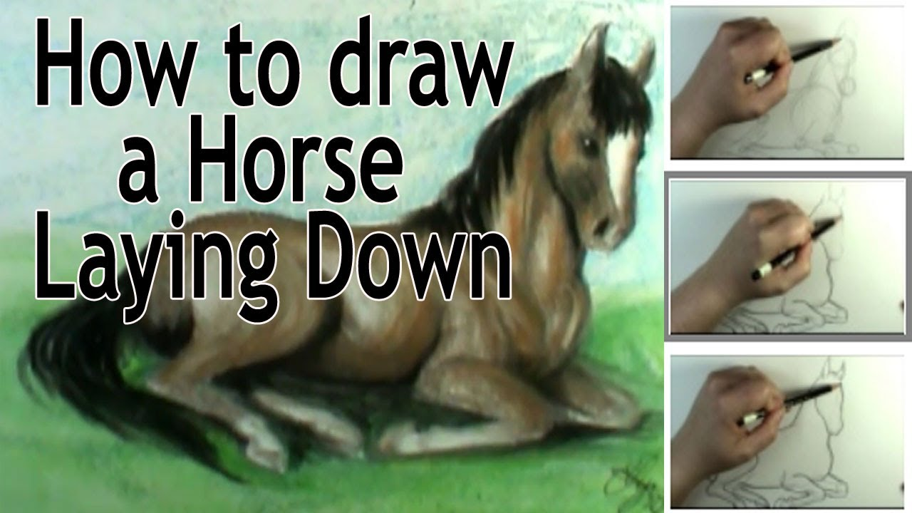Horse Lying Down Drawing Draw a Horse Laying Down