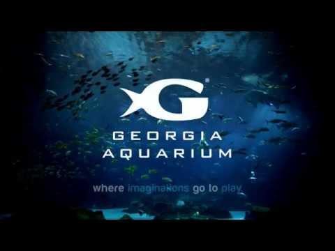 Georgia Aquarium - :15 Ocean Voyager Imagination Nights Pre-Roll