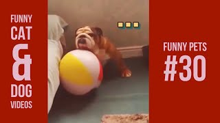 Funny CATS and DOGS Compiation 30 | PETS 2018