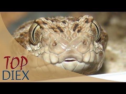 10 Serpientes más mortales y venenosas del mundo
