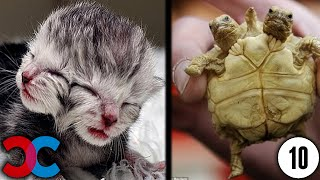 10 Bizarre Animal Mutations