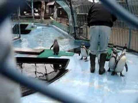 ペンギンのお食事