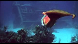 Splash.1984.720p (under water scene)