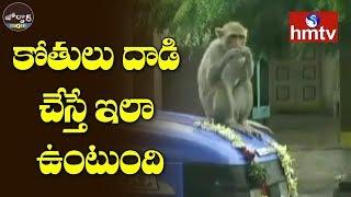 People Scared Of Monkeys In Mendora | Nizamabad | Jordar News  | hmtv