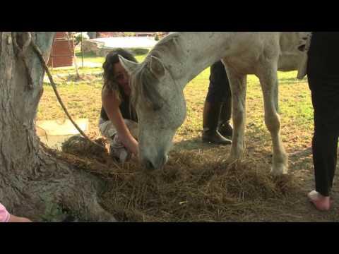 Vicente, una muestra del maltrato animal