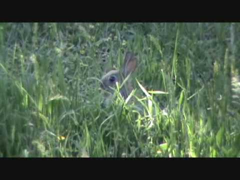 17 HMR Hunting: Rabbit Carnage