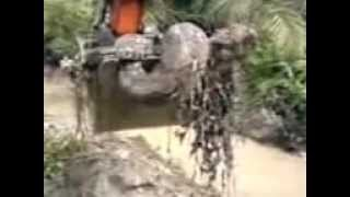 Heboh Ular terbesar Didunia di kebun kelapa sawit ( biggest snake in the world ) ... excited