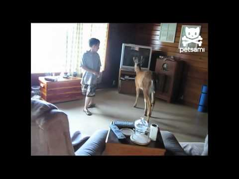 Unwanted guest: Bambi edition!