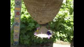 The blessing of  a swarm - a new colony of bees in a sun hive