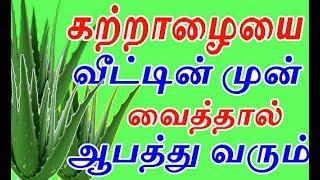 கற்றாழையை  வீட்டின் முன் நட்டு வைத்தால் ஆபத்து வருமா? | how to grow katralai or aloevera in home
