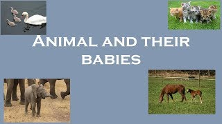 Animals for kids | Animal and their Young Ones | Animal and their Babies | Baby animals for kids