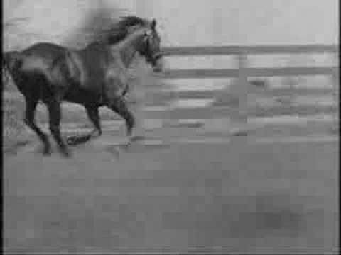 man of war horse. Man O#39; War [All videos,