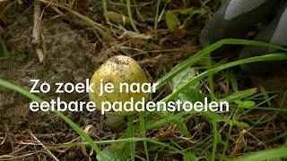 Zo ontwijk je giftige paddenstoelen: 'Sommigen zijn dodelijk' - RTL NIEUWS