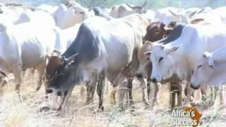 Pastoralists Embrace Trade