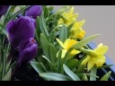 Time Lapse Flowers (Crocuses and... - Floral Wishes ecards - Flowers Greeting Cards