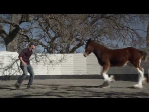 "HD Clydesdales 2013 Budweiser Super Bowl Ad — Extended Version of ""Brotherhood"""