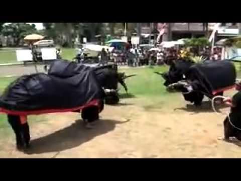 Kesenian Jaran Kepang Bantengan Turonggo Putro Singo Joyo Beringin Wajak ~ Asli Budaya Indonesia video