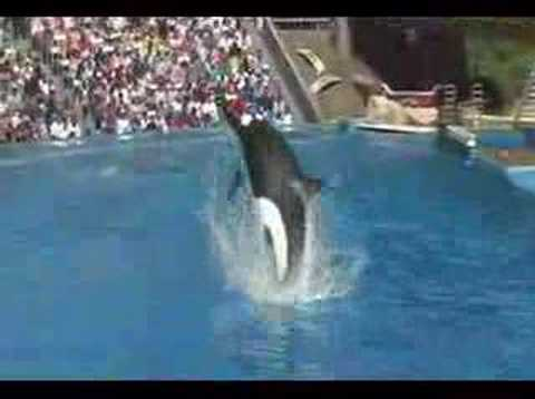 sea-world-killer-whale-jump.html