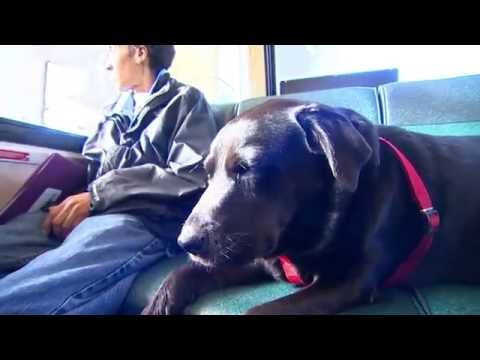 Meet Seattle's solo, bus-riding dog