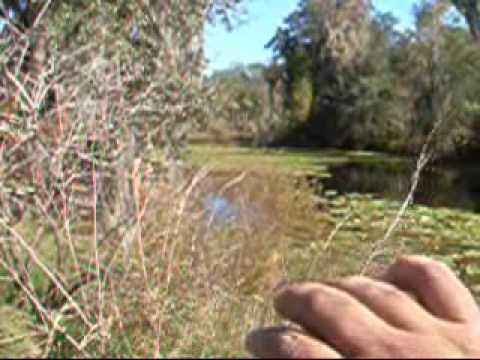 Oxbow Lake Incident