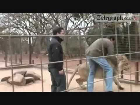 Top 10 Lion attacks on human (by odissey505)