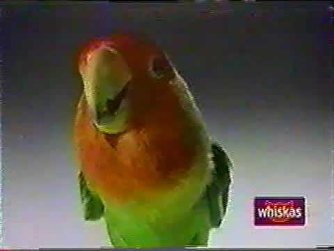 Whiskas Lovebird