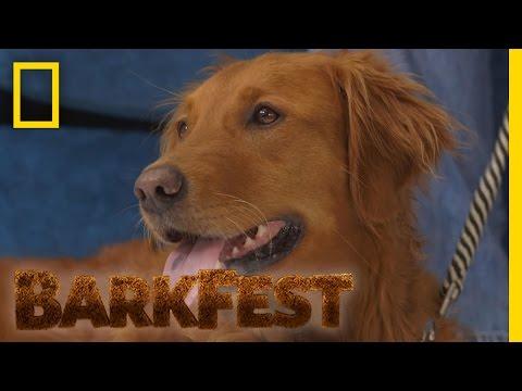 Top 5: Service Dogs | BarkFest