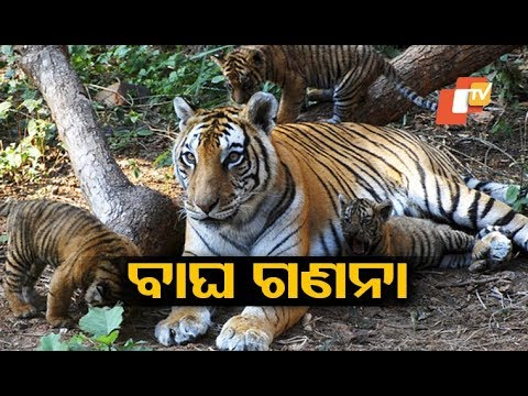 Tiger census begins in Odisha