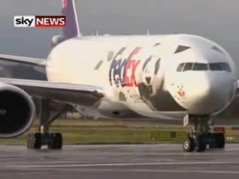 Giant Pandas Arrive In Edinburgh