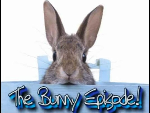 all for animals 27   bunnies 101 basic rabbit care   youtube