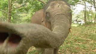 Lonely baby elephant makes new friend in SW China