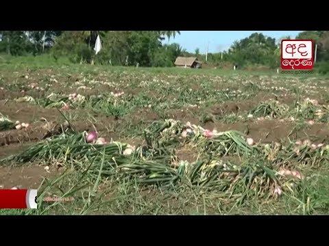 onion farmers lament|eng