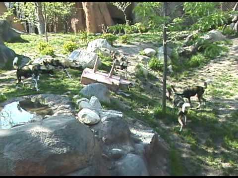Lincoln Park Zoo Enrichment