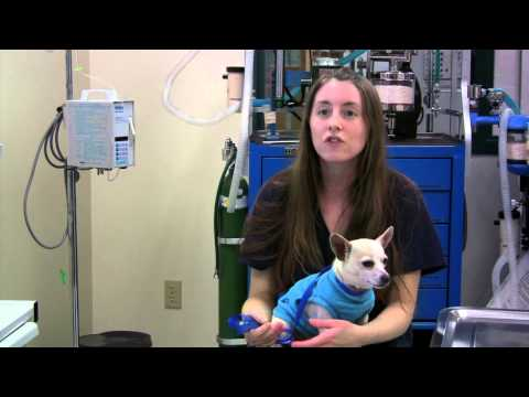 Cosumnes River College - Veterinary Technology