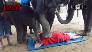 Elephant strips off woman clothes during massage  session