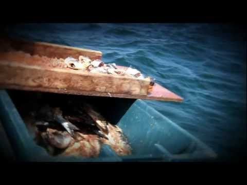 Team BDOutdoors Giant Bluefin Tuna Fishing PEI - 700 - 1000 pound fish!