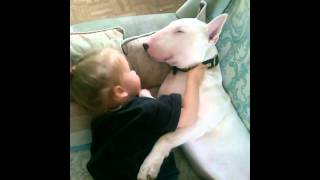 Little Girl And Bull Terrier Cuddle